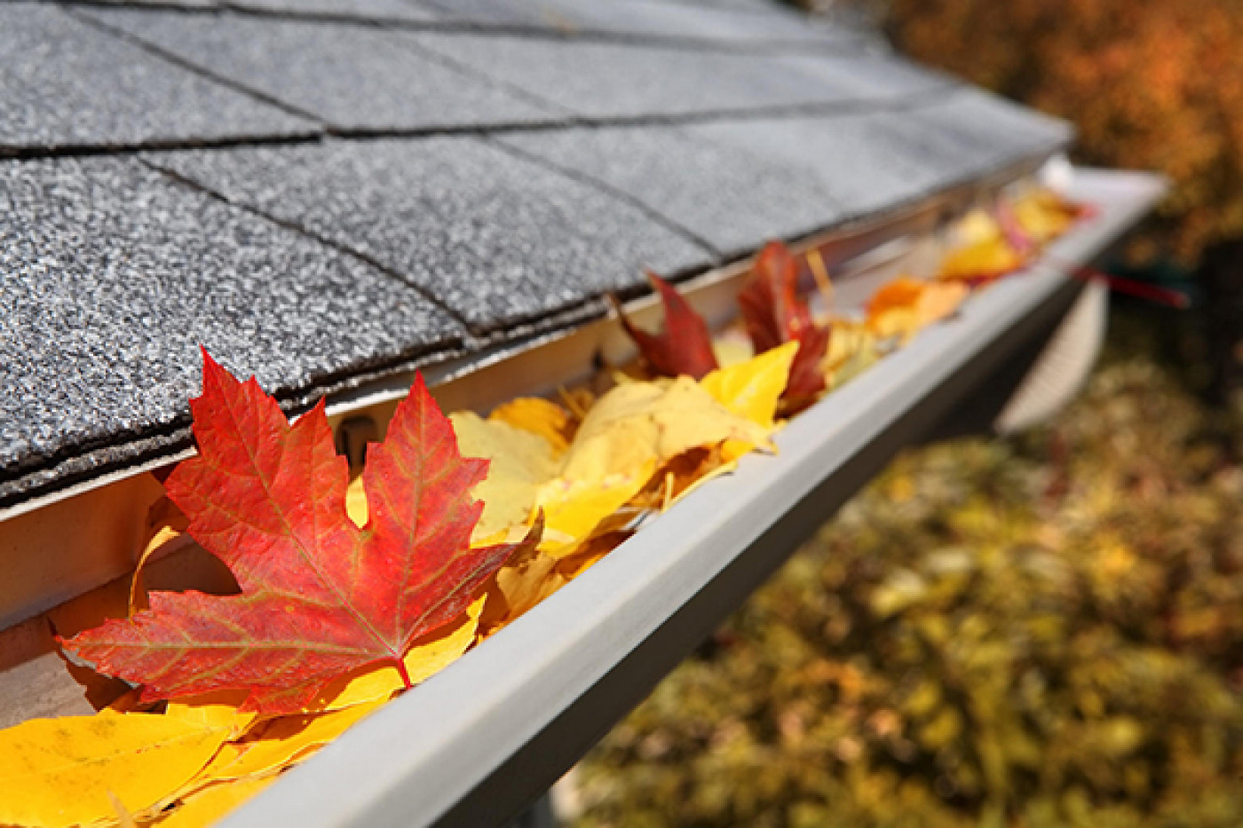 How to Solve Your Gutter Cleaning Problems This Fall