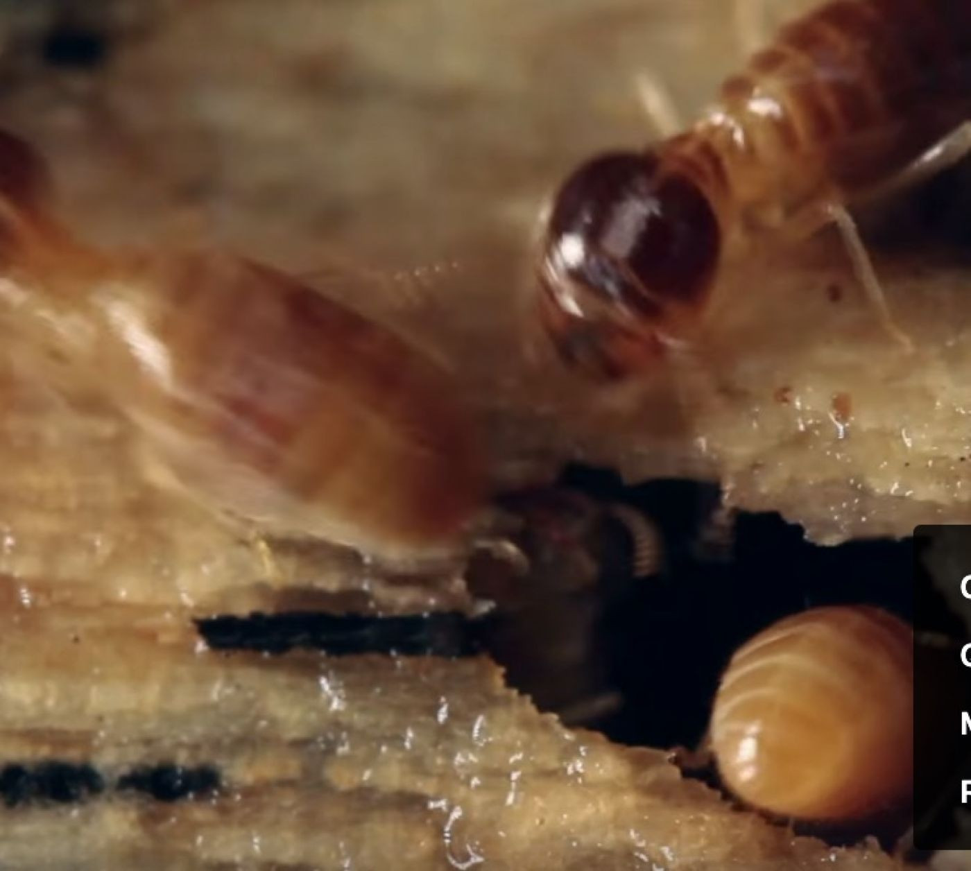 Time to Check Your Termite Bond